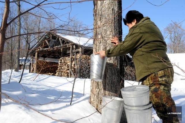 Le ver de terre pourrait constituer une menace à la biodiversité des érablières... (Archives La Tribune, Jessica Garneau)