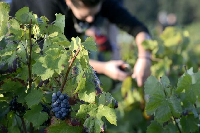 Des viticulteurs du Beaujolais avaient manifesté à la... (PHOTO AFP)