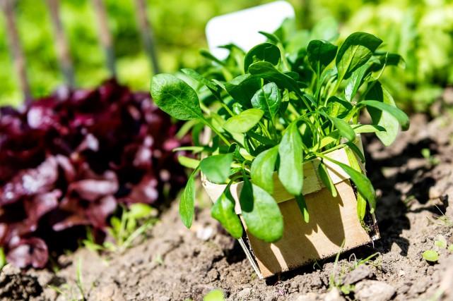 Les jardiniers expérimentés, comme les débutants, peuvent se... (123 RF)