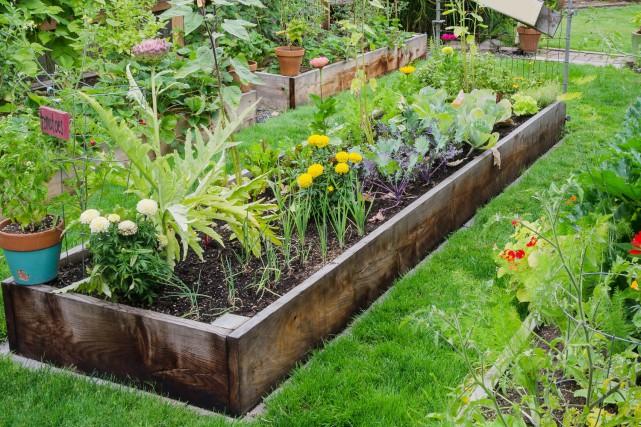 En faisant un jardin, vous économiserez sur l'achat... (123 RF)