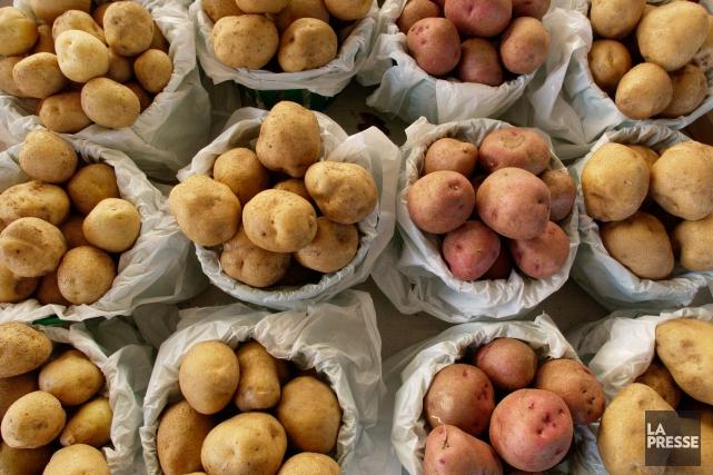 Les cultivateurs souhaitent que le surplus de pommes... (PHOTO ROBERT SKINNER, LA PRESSE)
