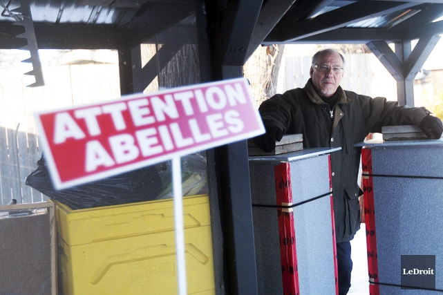 Le président d'Apiculture Gatineau, Daniel Hamelin, fait des... (Etienne Ranger, LeDroit)