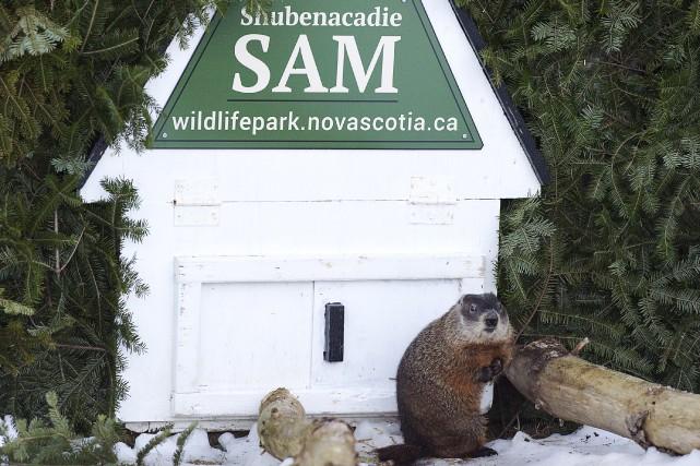 Shubenacadie Sam, qui réside au Shubenacadie Wildlife Park,... (La Presse Canadienne, Andrew Vaughan)