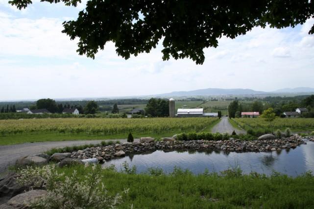Le domaine de Saint-Paul-d'Abbotsford consacrera trois jours en... (Fournie par le vignoble Les Petits Cailloux)
