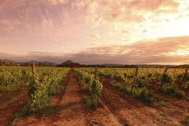 Sur les 752 000 hectares plantés de vignobles... (PHOTO THINKSTOCK)