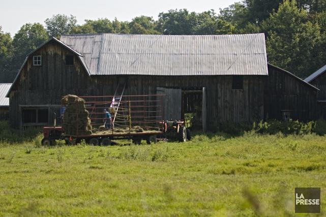 La mise en marché collective dans le secteur agricole est parfois sévèrement... (Archives, La Presse)