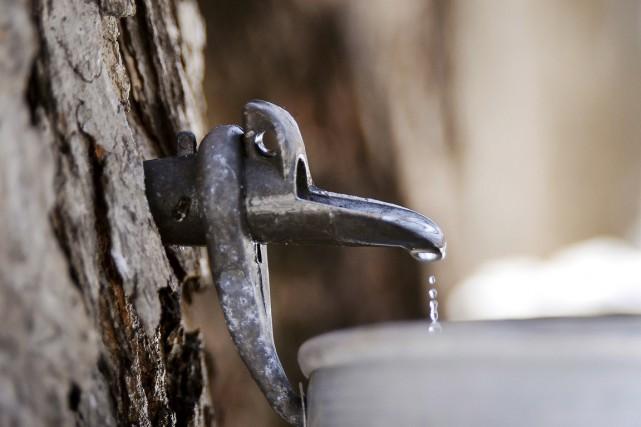 Le problème avec le sirop d'réable n'est pas... (Archives AFP)