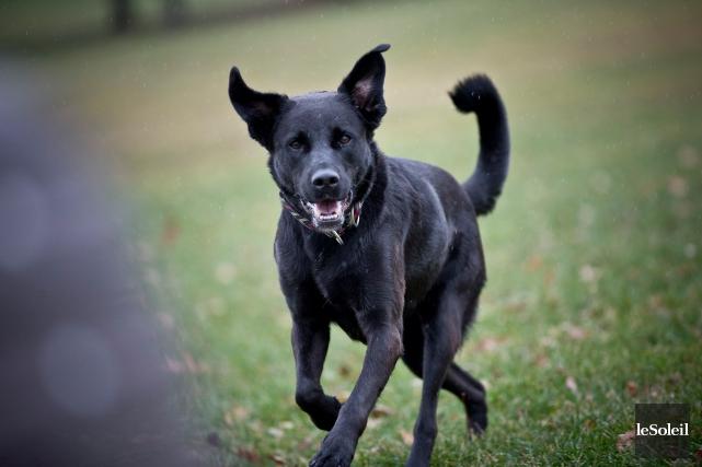 On estime qu'un chien sur six (16 %)... (Photothèque Le Soleil)