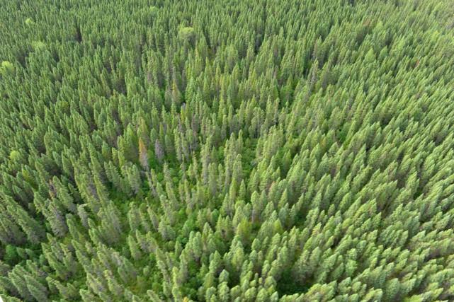 Vue sur la forêt boréale sur la rivière... (PHOTO CLÉMENT SABOURIN, ARCHIVES AFP)