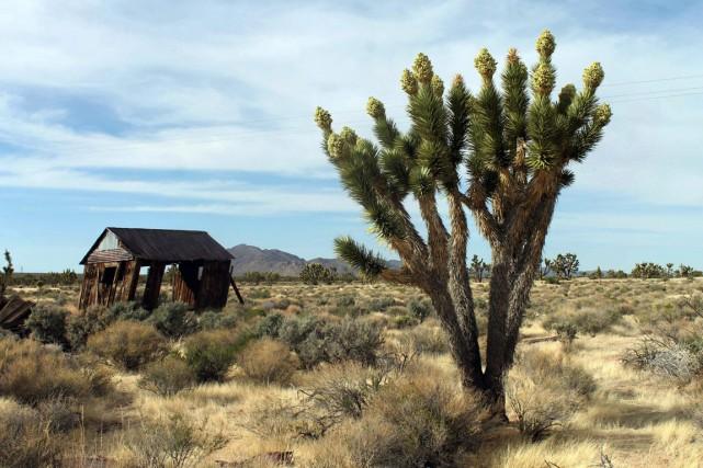 Trois secteurs du désert de Mojave, en Californie,... (PHOTO ARCHIVES AP)