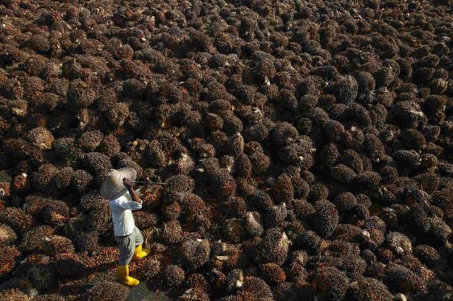 L'Afrique est le nouvel eldorado des industriels de l'huile de palme et du... (PHOTO AFP)