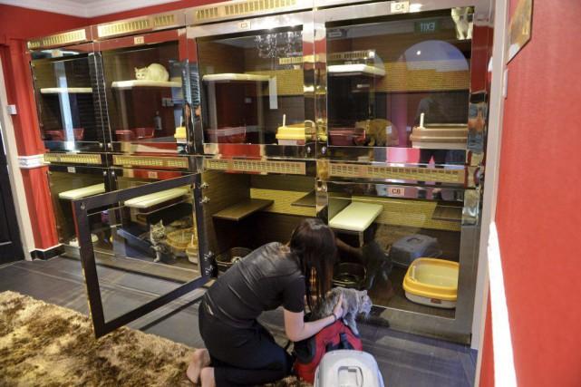 Les chambres pour chats de l'hôtel Wagingtonsont ornées... (PHOTO ROSLAN RAHMAN, AFP)