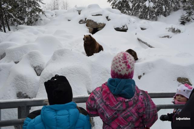 Le Zoo sauvage de Saint-Félicien a connu une hausse de sa clientèle de 10%, en... (Archives Le Quotidien)