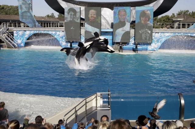 Peta avait accusé SeaWorldSan Diego d'avoir envoyé un... (AP, Chris Park)