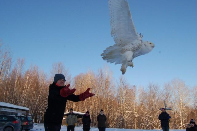 Un harfang des neiges est remis en liberté... (PHOTO FOURNIE PAR FITZGÉRALD GUY)