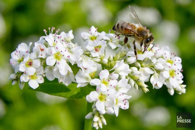 Quarante pour cent des pollinisateurs invertébrés, comme les... (archives La Presse)