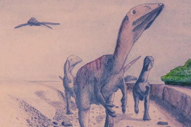 Une équipe scientifique a annoncé la découverte d'un gisement de fossiles de 60... (Illustration Steven Vidovic, Archives Reuters)