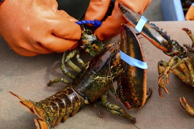 Les pêcheurs de homards des Îles-de-la-Madeleine s'opposent à... (Collaboration spéciale Johanne Fournier)