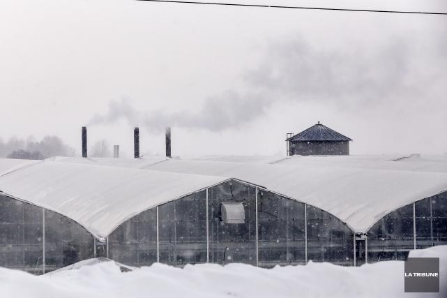 Le complexe serricole des serres Sagami situé à... (Archives, La Tribune)