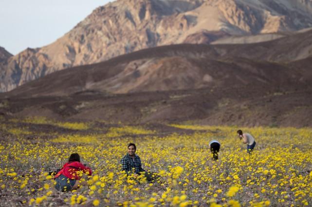 La floraison inhabituelle a attiré plusieurs curieux.... (AP, Jae C. Hong)