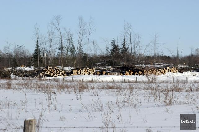 De nombreux arbres ont été abattus en quelques... (Martin Brunette, LeDroit)