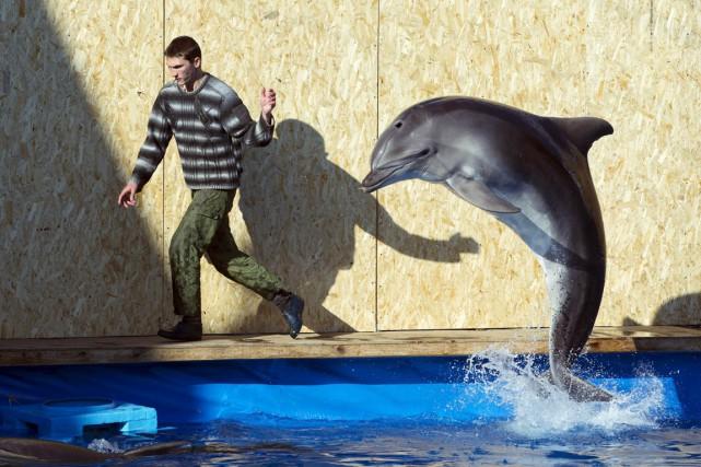 Les cinq dauphins doivent être envoyés au centre... (PHOTO)