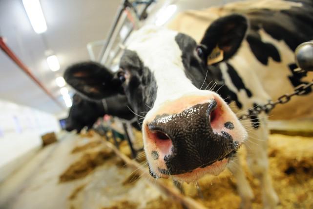Les membres du Syndicat des producteurs de lait du Saguenay-Lac-Saint-Jean... (Photo 123RF)