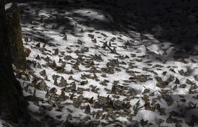 Les montagnes à l'ouest de Mexico ont connu... (AFP, Enrique Castro)