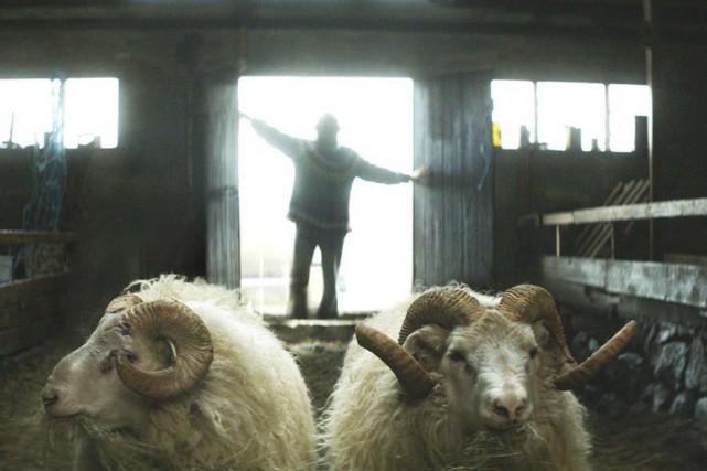 Deux frères ennemis, des moutons et les verts pâturages d'Islande. Voilà... (Courtoisie)