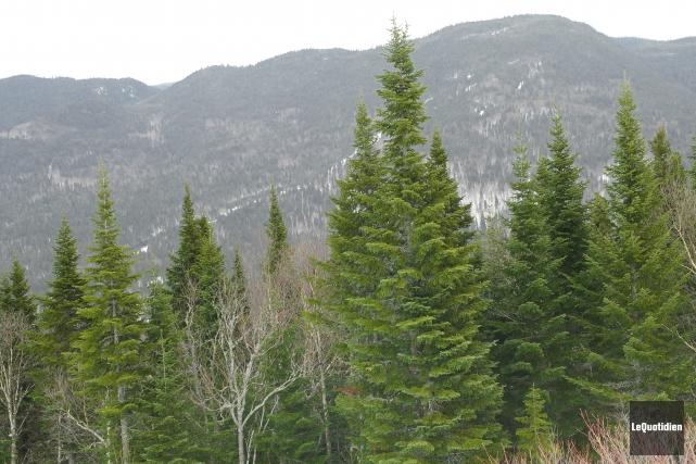 ÉDITORIAL / Difficile de se faire à l'idée: la forêt boréale ne suffit plus aux... (Archives Le Quotidien, Gimmy Desbiens)