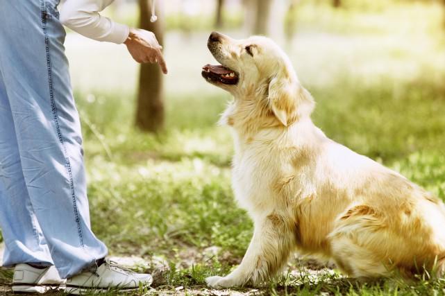 PICOTTE / Vous avez sûrement déjà vu ou eu un chien qui semblait tout... (Photo 123RF)