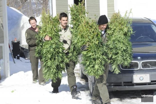 La Sûreté du Québec a saisi 200 plants... (Photo Le Quotidien, Gimmy Desbiens)