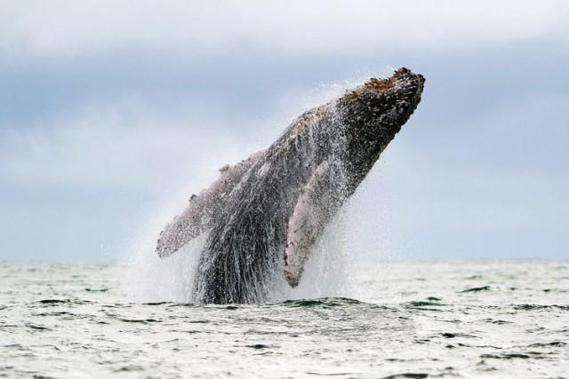La haute mer représente la moitié de la... (Photo Archives AFP)