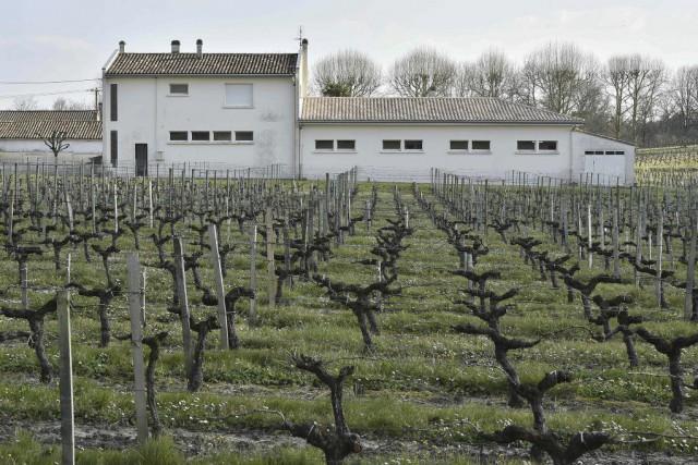 Une vigne jouxtant une école de Villeneuve-de-Blaye... (PHOTO GEORGES GOBET, AFP)