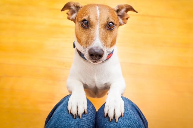 PICOTTE / Le chien a une grande capacité d'adaptation. Au fil des ans, il s'est... (Photo 123RF)