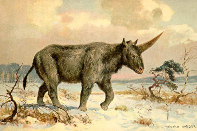 Illustration deElasmotherium sibiricum. La licorne sibérienne mesurait environ... (PHOTO WIKICOMMONS)