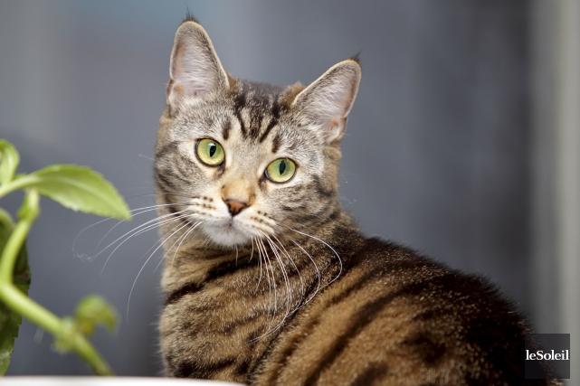 La question: les chats ont-ils un accent? (Photothèque Le Soleil)