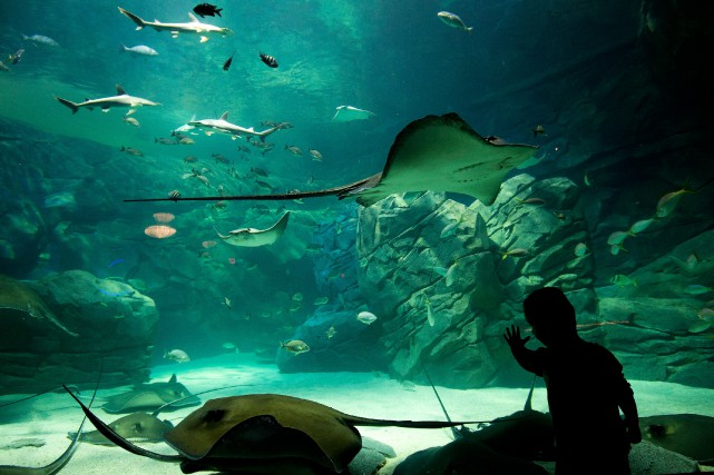 Le propriétaire de l'aquarium de Toronto, Jim Pattison,... (PHOTO NATHAN DENETTE, ARCHIVES LA PRESSE CANADIENNE)