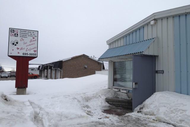 La SPCA Saguenay survit grâce, entre autres, à... (Photo Le Progrès-dimanche, Mélissa Viau)