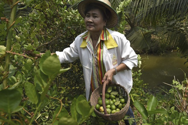 Laddawan Kamsong, qui plante du riz depuis plus... (AFP, Christophe Archambault)