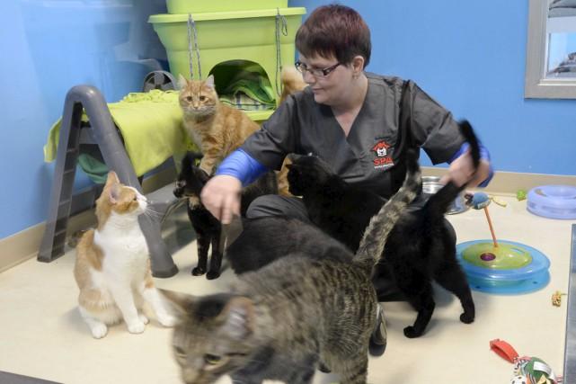Ces chats placés dans une aire de jeux... (Sylvain Mayer)