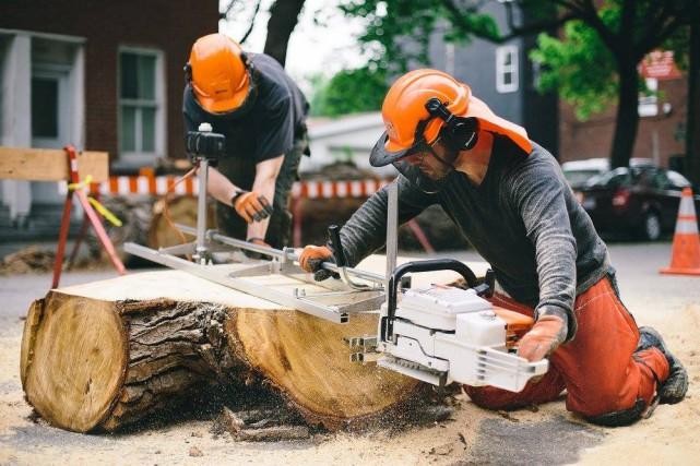 Les arbres abattus dans la région de Montréal... (PHOTO FOURNIE PAR MATPEL ÉBÉNISTERIE ÉCOLOGIQUE)