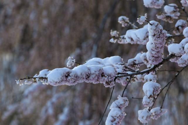 Il a fait froid, très froid, mais pas autant que le 4 avril 1954. Les... (Associated Press)
