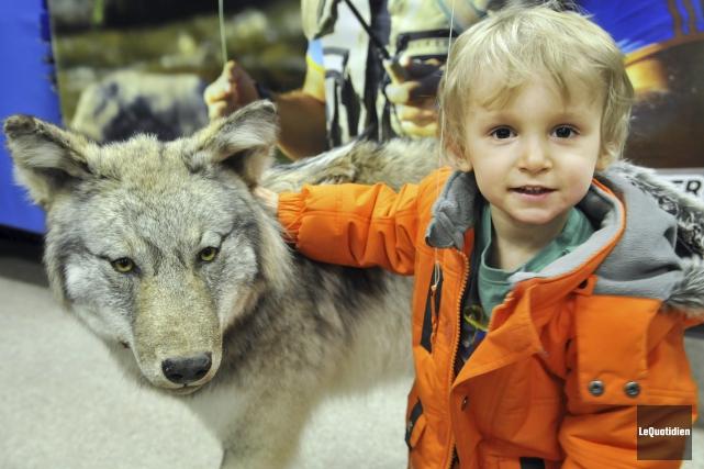 Qui a peur du loup? Certainement pas le... (Photo Le Quotidien, Rocket Lavoie)