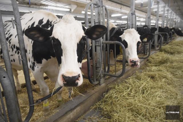 Victimes de l'entrée au pays des protéines laitières... (Archives, La Tribune)