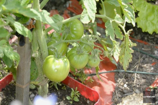 Le travail des membres de l'organisme communautaire Les Jardiniers solidaires... (Archives, La Tribune)