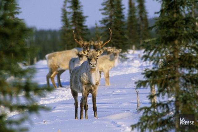 CHRONIQUE / La volonté politique favorable à l'industrie forestière s'efface... (Archives La Presse)
