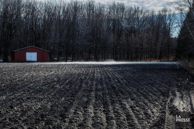 Un nouveau rapport révèle que la valeur moyenne des terres agricoles au Canada... (PHOTO EDOUARD PLANTE-FRÉCHETTE, ARCHIVES LA PRESSE)