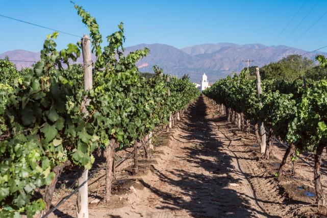 «La viticulture en Argentine se fait dans des... (PHOTO THINKSTOCK)