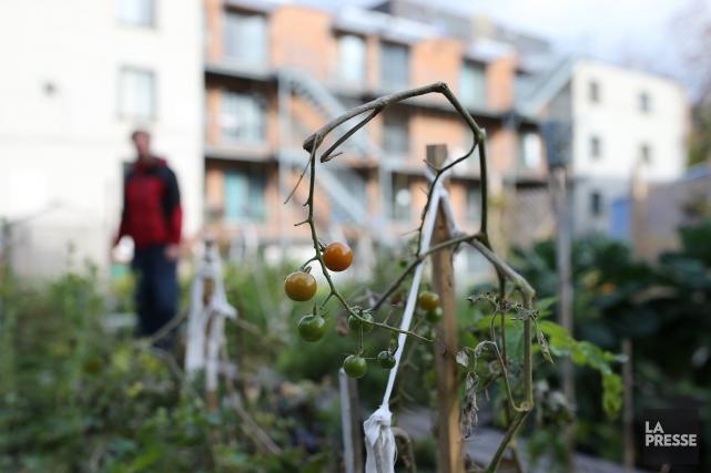 Un jardin communautaire de Montréal-Nord... (Photo Martin Chamberland, archives La Presse)